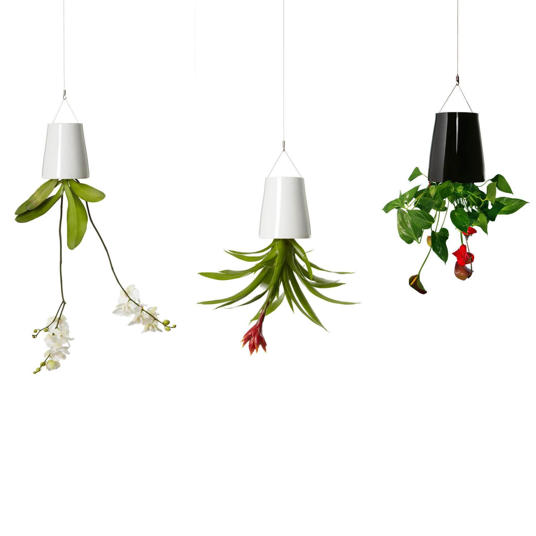 Plantele și creativitatea la birou