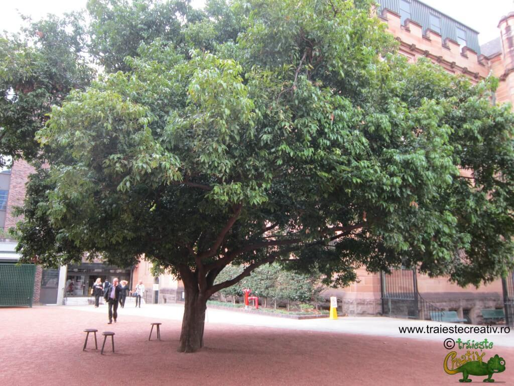 Sedinta sub copac